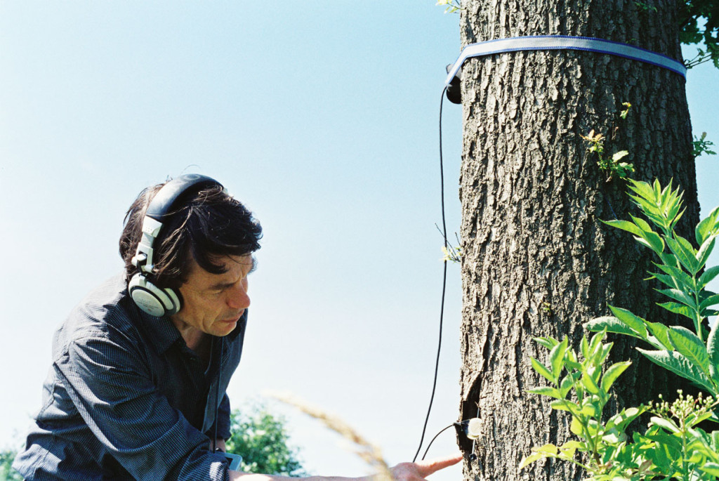 justin_recording_tree_med
